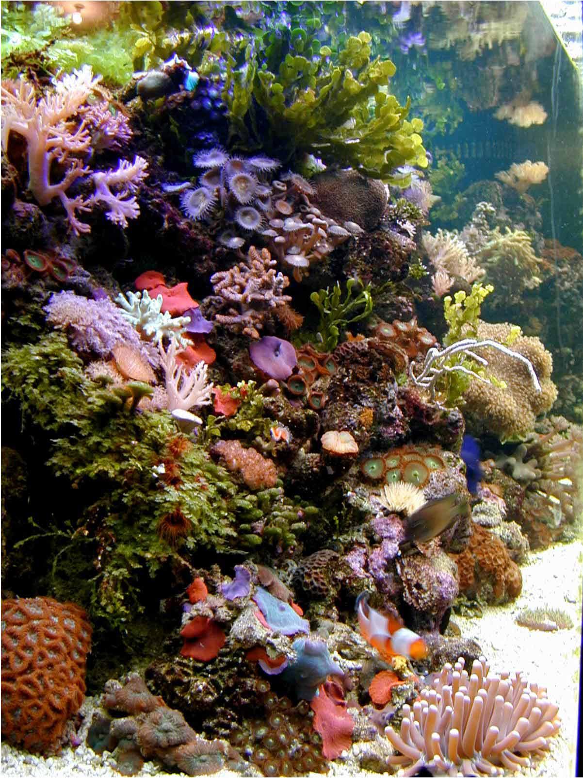 Saltwater Aquariums